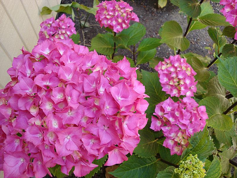 /flowers